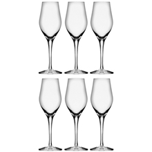 Sense Champagne/Drinkglass 6-pack